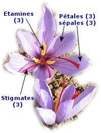 fleurcomposantes